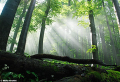 light in primeval forest (mk_lynx) Tags: light sun mountains nature forest wildlife slovenia rays mists potofgold naturesfinest primeval dinaric betterthangood dinarides primevalforestgroups pfbeams pfcathedral pfheaven