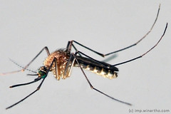 mosquito by 21win @};-