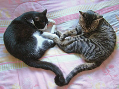 My heart (Kitty & Kal-El) Tags: cats love cat bed heart sleep kitty sleepy gato corao gata lovely kalel platinumheartawards 10prettykittycomments 8prettykittycommentspartii boc1008