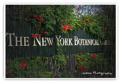 The New York Botanical Garden. NYBG