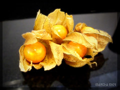 PHYSALIS (Martha MGR) Tags: frutas yellow fruit jaune amarelo giallo yelow 1001nights vernissage viola marrone 1000views physalis gmt iloveit naturesfinest sobeautiful mmgr supershot flickrsbest exoticfruits diamondclassphotographer naturephotoshp theunforgettablepictures theperfectphotographer goldstaraward thebestofday gnneniyisi rubyphotographer vosplusbellesphotos newworldglobalaward goldenmasterpiece novavitanewlife marthamgr reservaespecial 4msphotographicdream 3msroyalflowers 2msroyalstation marthamariagrabnerraymundo marthamgraymundo