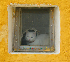 Framed cat (byrdiegyrl) Tags: white window yellow cat chat framed santorini greece gato 2008 thumbtacks thira thechallengefactory