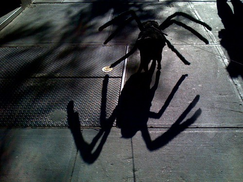 Spider-Dog spider shadow