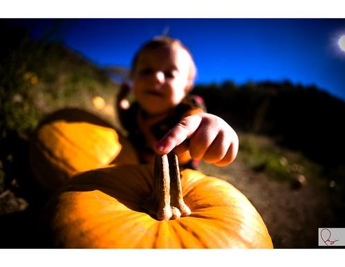Pumpkin - 04