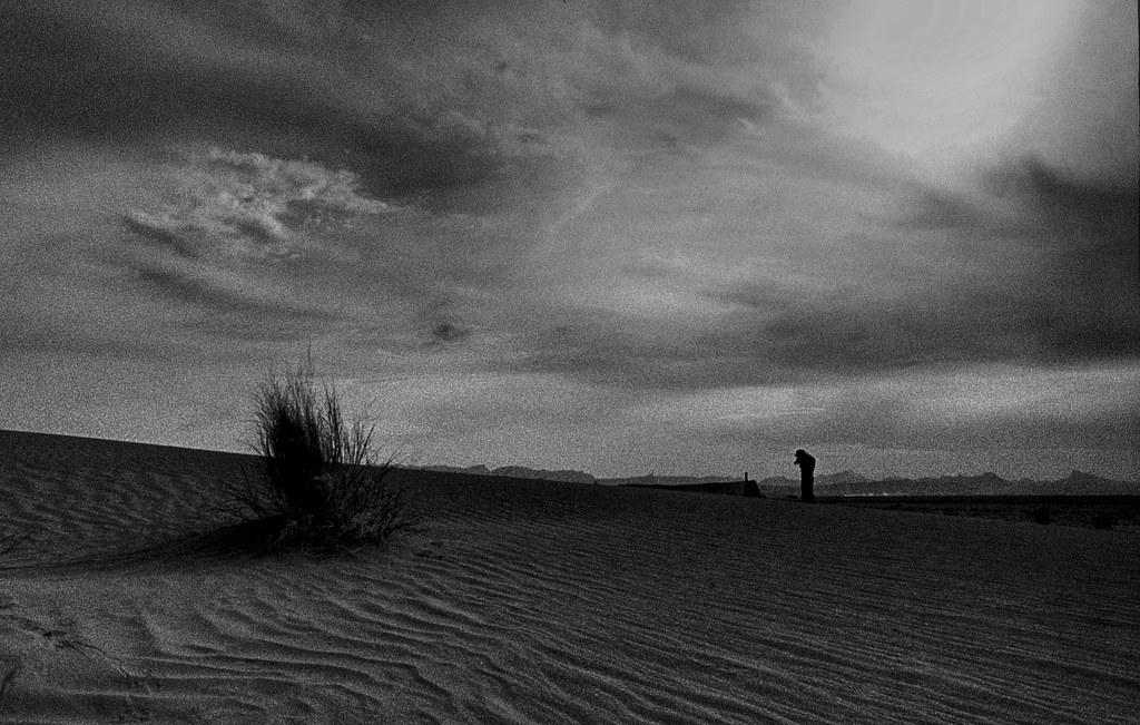 I dream of gardens in the desert sand...