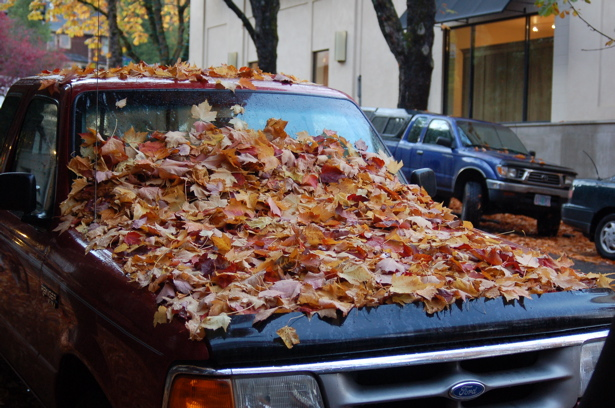 autumn_leaves_ford