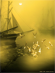 'FogHorns'. (Jan Groen.) Tags: sea moon seagulls holland amsterdam fog sailing seagull gulls ships flight thenetherlands atmosphere moonlight vapor brume sailingvessels cityharbor fogginess vapourousness atmosphericstate
