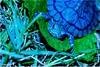 MY best friend (Nouf Alkhamees) Tags: macro green canon turtle 100mm alk nono dogma alkuwait الكويت كويت nouf عشب اخضر كانون نوف سلحفاة نونو colourartaward flickrlovers دقمة