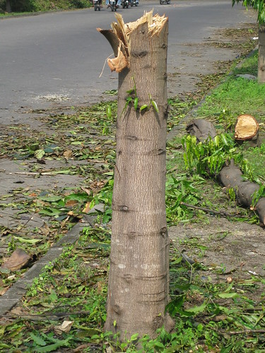 Manche Bäume hat's ganz hart erwischt