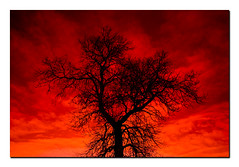 Dancing on Fire... (Louis Lalibert Photographie) Tags: red canada tree silhouette fun nikon dramatic evil qubec redsky charlevoix cokinfilter baiestpaul evilsky photoshopcs3 nikond40x louislalibertphotographie lightroom21