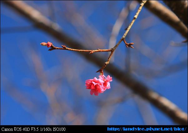 9711-新社花海:Date with Bee_052.jpg