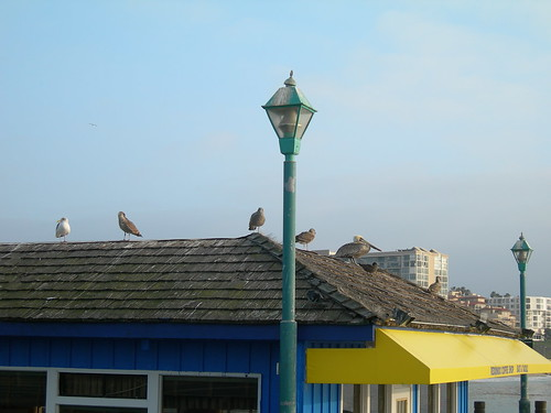 2008-12-02 Birds at Redondo Beach Fishermens Wharf (2)