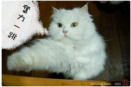 [叮叮]Cat。跳躍01
