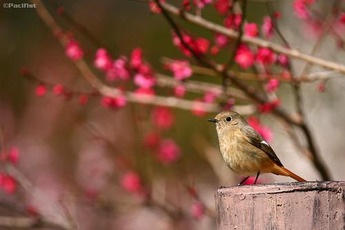 صور من الطبيعة اليابانية 3287373023_1cb505e45