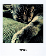 "#Yesterdays #Dailypolaroid #268 #fb • <a style=""font-size:0.8em;"" href=""http://www.flickr.com/photos/47939785@N05/5854145642/"" target=""_blank"">View on Flickr</a>"
