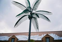 palm (ponyintheair) Tags: usa snow chicago illinois gasstation contax palmtree t3 coconuts feb08
