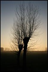 All Their Eyes Are Just Trained On The Street (Sartori Simone) Tags: italien trees sunset italy sun alberi geotagged europa europe italia tramonto pearljam sole italie veneto allrightsreserved simonesartori campolongomaggiore fotopoetiphotopoetry