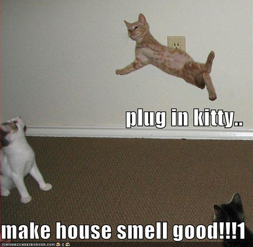 Funny Cat Pictures With Captions #18