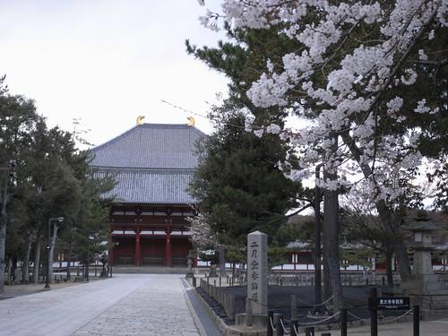 東大寺(桜)-01