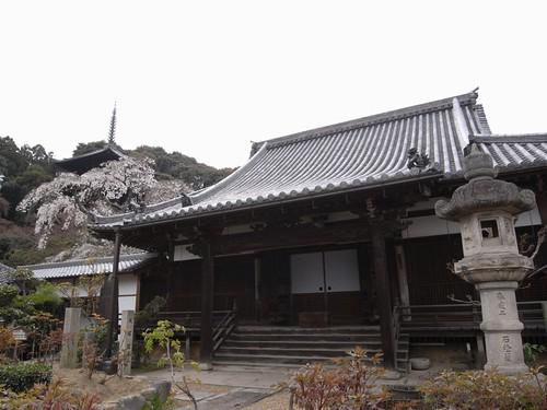 当麻寺(桜)-09