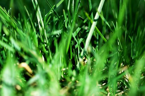 04/15/08 grass