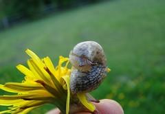 Shy slug