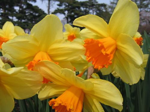 北國春天來了!