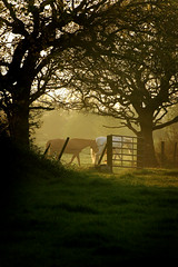 Storeton fields and horses at sunset (jimmedia) Tags: sunset horses shots fields mega storeton goldstaraward