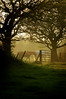 Storeton fields and horses at sunset (jimmedia) Tags: sunset horses shots fields mega storeton goldstaraward