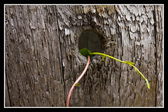 The Life Hole (minuano12) Tags: wood plants verde green texture madera plantas hole texturas hueco 0016