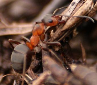 Jeg har jobbet som en maur