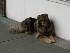 Waiting for the Man (knightbefore_99) Tags: dog chien vancouver sunrise puppy nice furry waiting bc sweet hastings eastvan