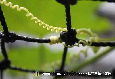 20080605@我家樓頂的小花園 (15)