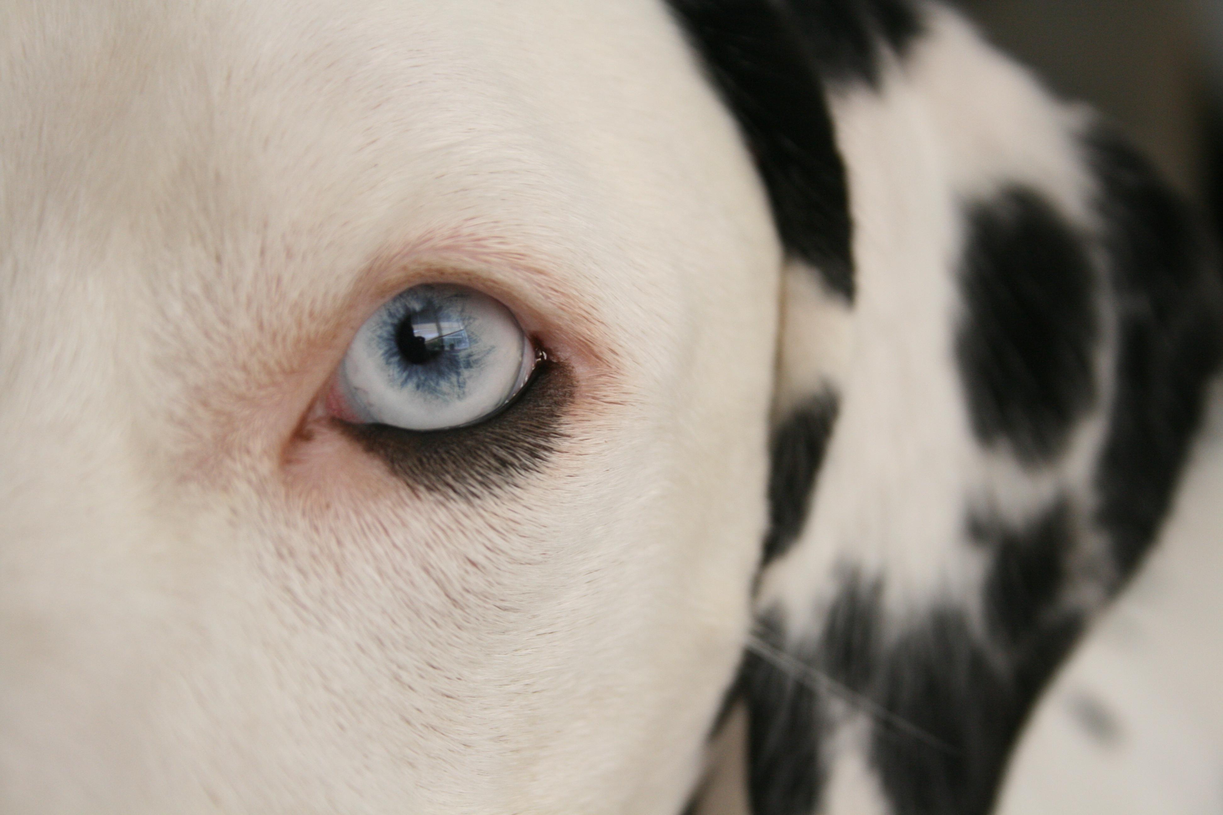 http://farm4.static.flickr.com/3139/2583140302_ef69600e95_o.jpg
