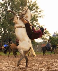 O malabruja (Eduardo Amorim) Tags: brazil horses horse southamerica brasil caballo cheval caballos cavalos pferde cavalli cavallo cavalo gauchos pferd riograndedosul pampa hest hevonen campanha brsil chevaux gaucho  amricadosul fronteira hst gacho  amriquedusud  gachos  sudamrica suramrica uruguaiana amricadelsur  sdamerika jineteada   americadelsud gineteada  americameridionale eduardoamorim