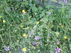 Wildflowers (steven_and_haley_bach) Tags: flowers flower wildflowers wildflower byzantine mystras sixthday mistras greecevacation byzantineruins