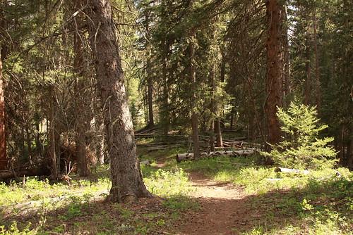 Montana June 208 073
