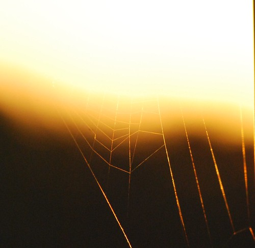 Sunset Spider Web