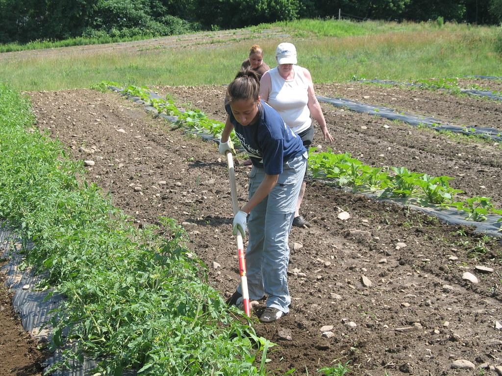 Green Team Farming at Johnson Farm