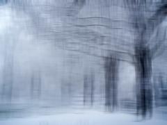 Snow In Preston Park Abstract (grahambrown1965) Tags: park trees blackandwhite white snow black tree sussex brighton olympus preston eastsussex prestonpark littlestories aplusphoto olympus770sw 770sw anythingdigital platinumheartaward thatsbostin flickrestrellas picswithsoul