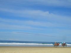 CIMG0298 (Queenbean79) Tags: beach camels portmacquarie