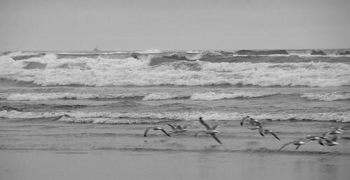 The beach 06