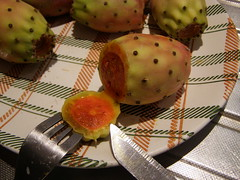 cactus fig prickly pear
