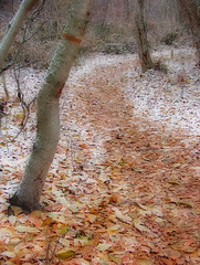 Into Winter (BigSkyKatie) Tags: park autumn trees winter snow fall leaves creek montana mt path first fallen curved effect rattlesnake crooked orton greenough bigskycountry missoulamt missoulamontana rattlesnakecreek greenoughpark ©katielasallelowery