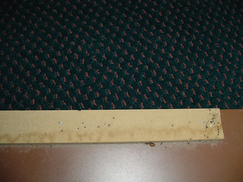 bed bug dots on back of hotel headboard