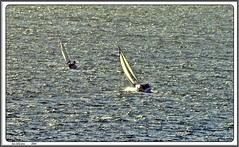veleros (LUIS FELICIANO) Tags: españa google flickr barcos galicia ria vigo veleros riadevigo mywinners goldstaraward