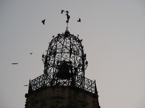 birds in the bell tower aix