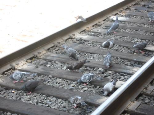 Birds on the Track, Los Angeles Amtrak