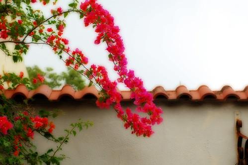 Trailing flower