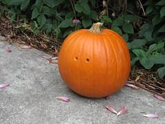 DarkPumpkin - 13